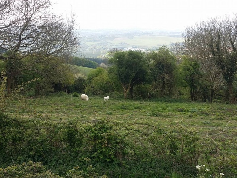 The asbestos was dumped near a lay-by, overlooking Newchurch. Picture by Tony Smith.