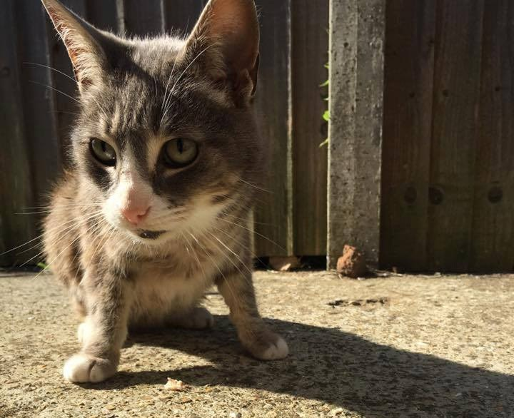 Fleabag the cat was killed on the Isle of Wight in 2016. His death has been linked to incidents in Southsea by Hampshire Constabulary.