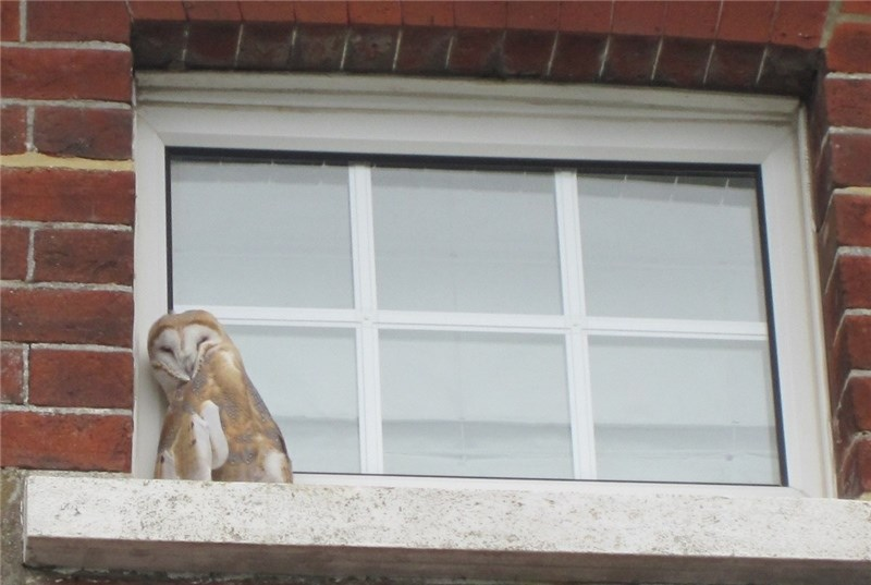A flashback to when Barny was marooned on a window ledge in Freshwater.