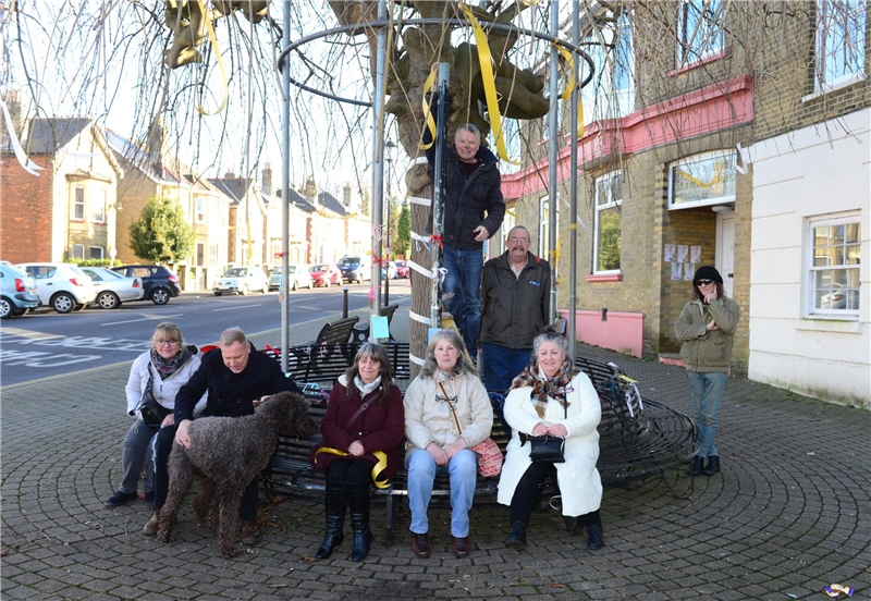 Isle Of Wight Council Has U0027no Objectionu0027 To Removing Umbrella Tree In East  Cowes  Has No Objection